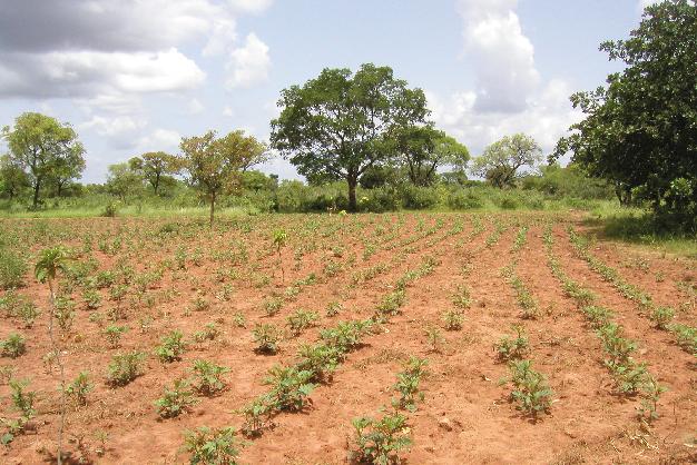 RCA reforestacion-01