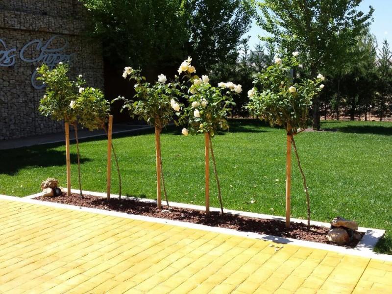 Los Chopos – Obra de jardinería